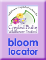 where to find wildflowers in crested butte colorado