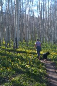 Spring on Snodgrass Mt. Crested Butte