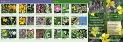 Handy Dandy Wildflower Guide
