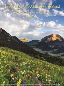 crested butte wildflower poster