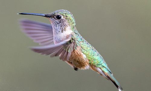 Birding & Butterflies
