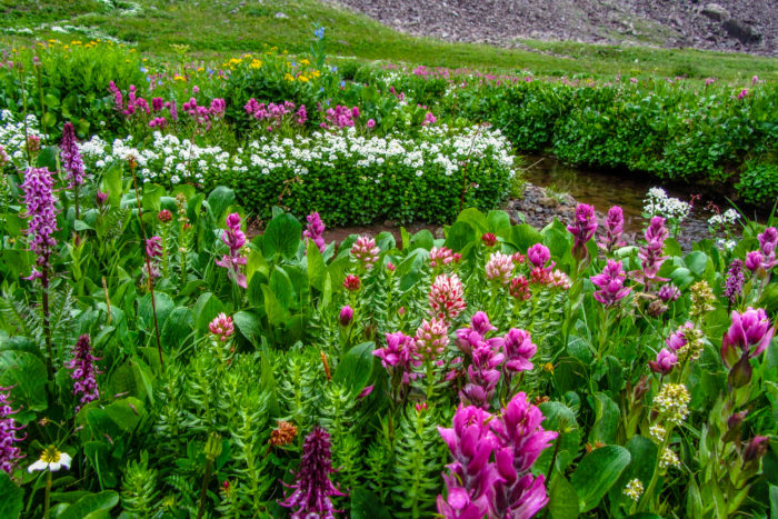 Crested Butte Wildflower Festival Donation-001